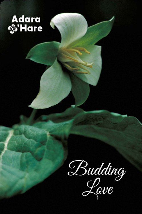 cover image for Budding Love by Adara O'Hare